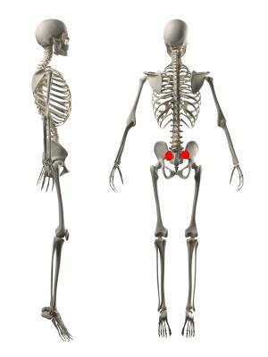 skeleton front back and side profile