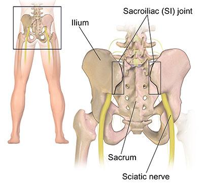 Sciatic nerve location
